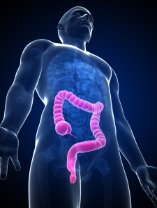 colon rectum bowel GI gastrointestinal gut