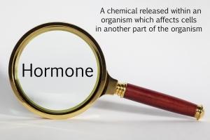 hormone magnifying glass estrogen